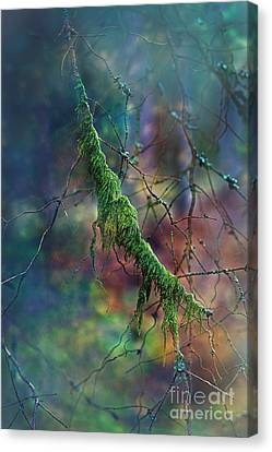 Mystical Moss - Series 1/2 Canvas Print by Agnieszka Mlicka