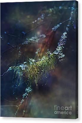 Mystical Moss - Series 2/2 Canvas Print by Agnieszka Mlicka