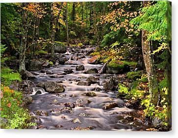 Mystical Mountain Stream Canvas Print by Brad Hoyt
