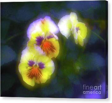 Mystical Pansies Canvas Print by Judi Bagwell
