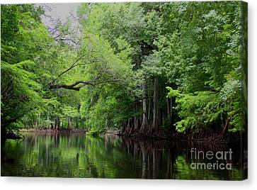 Mystical Withlacoochee River Canvas Print