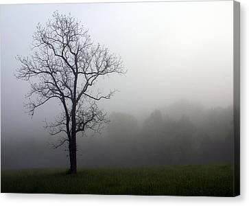 Mysty Tree Canvas Print by Marty Koch