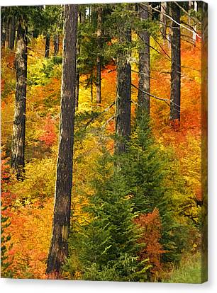 N W Autumn Canvas Print by Wes and Dotty Weber