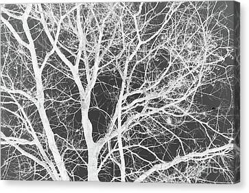 Naked Branch Canvas Print by Dodie Ulery