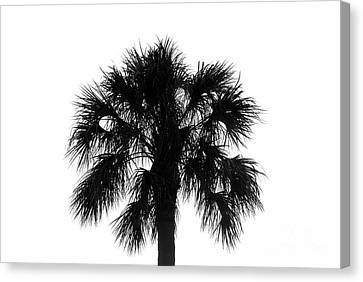 Naked Palm Canvas Print by David Lee Thompson