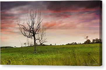 Naked Tree 01 Canvas Print by Kevin Chippindall