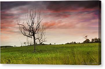 Naked Tree 01 Canvas Print