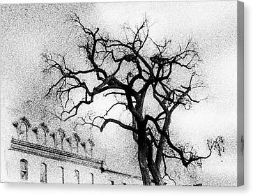 Naked Tree Canvas Print by Celso Bressan