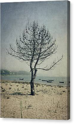 Canvas Print featuring the photograph Naked Tree by Marco Oliveira