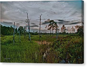 Naked Trees Swamp Canvas Print by Stephen  Johnson