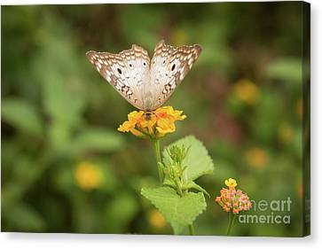 Namaste Butterfly Canvas Print by Ana V Ramirez