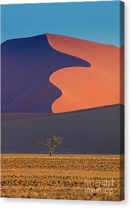 Namib Dune Canvas Print by Inge Johnsson