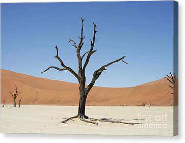 Namibia Desert Canvas Print by Nichola Denny