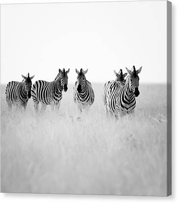 Zebra Canvas Print - Namibia Zebras II by Nina Papiorek