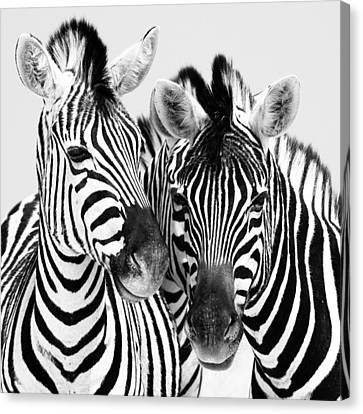 Namibia Zebras Iv Canvas Print