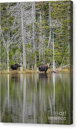 Nancy Pond - White Mountains New Hampshire Usa Canvas Print