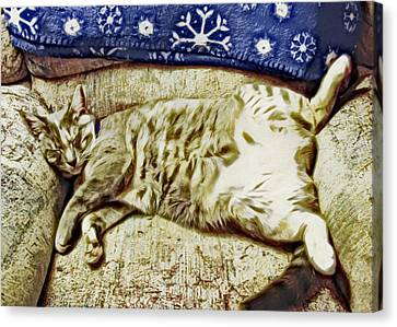 Nap Position Number 16 Canvas Print by David G Paul