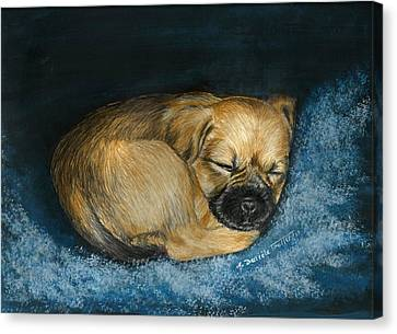 Dog Canvas Print - Nap Puppy by Daniele Trottier