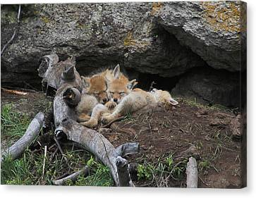 Canvas Print featuring the photograph Nap Time by Steve Stuller