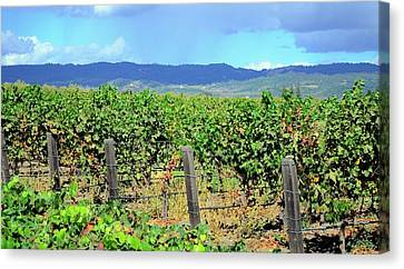 Canvas Print featuring the photograph Napa by Corinne Rhode