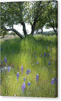 Napa Hills Meadow Canvas Print by Dallas Hyatt