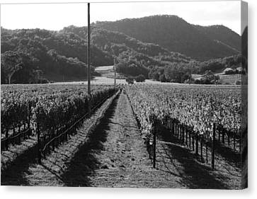 Napa Valley Vineyard .  Black And White . 7d9020 Canvas Print by Wingsdomain Art and Photography