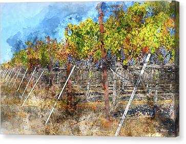 Napa Valley Vineyard In Autumn Canvas Print
