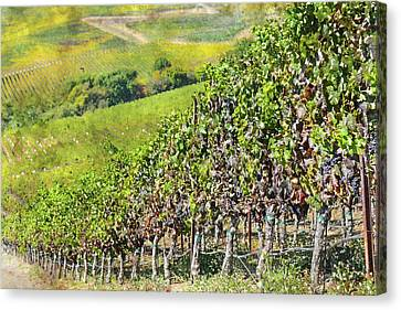 Napa Valley Vineyard In California Canvas Print by Brandon Bourdages