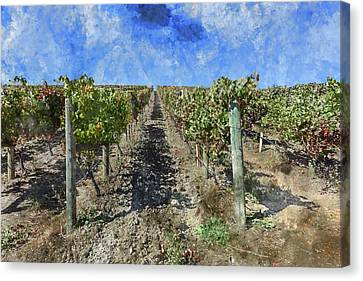 Napa Valley Vineyard - Rows Of Grapes Canvas Print by Brandon Bourdages