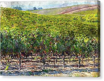 Napa Valley Vineyards In California Canvas Print by Brandon Bourdages