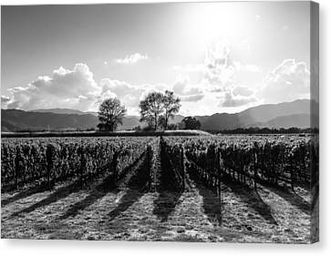 Napa Valley And Vineyards Canvas Print - Napa Vineyard B/w by Paul Scolieri
