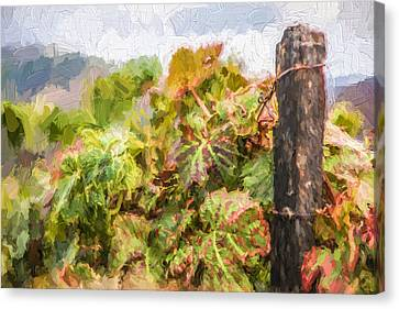 Napa Vineyard Canvas Print by David Letts