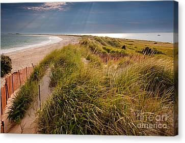 Napatree Point Preserve Canvas Print by Susan Cole Kelly