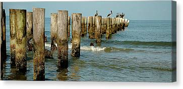 Naples Pier And Pelicans Canvas Print