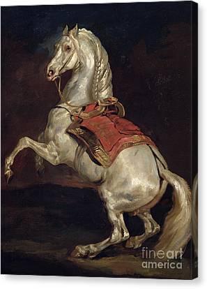 Napoleon's Stallion Tamerlan Canvas Print