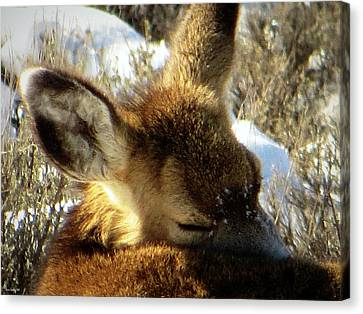Canvas Print featuring the photograph Napping Fawn by Karen Shackles