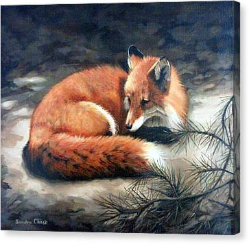 Naptime In The Pine Barrens Canvas Print by Sandra Chase