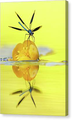 Narcissus - Damselfly Reflected In The River Canvas Print by Roeselien Raimond