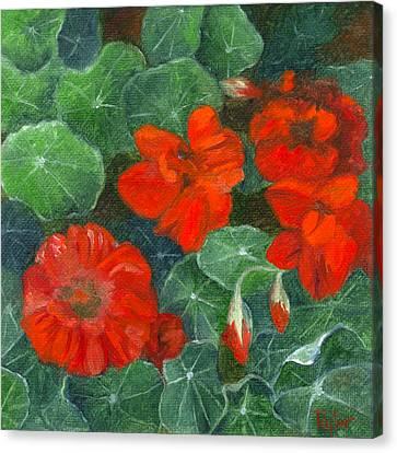 Nasturtiums Canvas Print by FT McKinstry