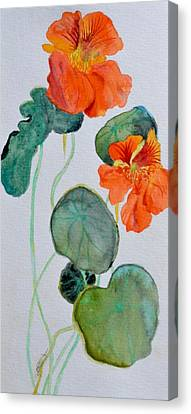 Nasturtiums Study Two Canvas Print by Beverley Harper Tinsley