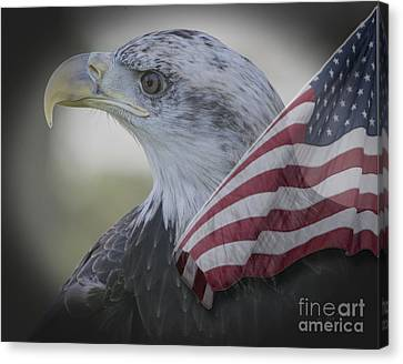 National Bird Bald Eagle Canvas Print by Linda Troski
