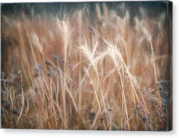 Native Grass Canvas Print by Scott Norris