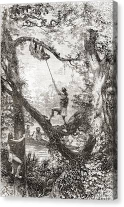 Native Indians Capturing A Tree Sloth Canvas Print by Vintage Design Pics