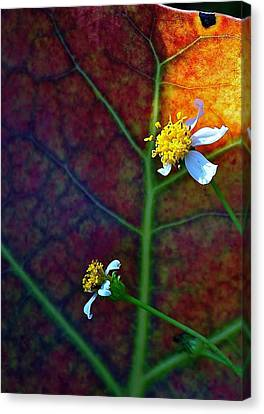 Natural 10 17g Canvas Print