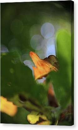 Natural Abstract Canvas Print by Odd Jeppesen