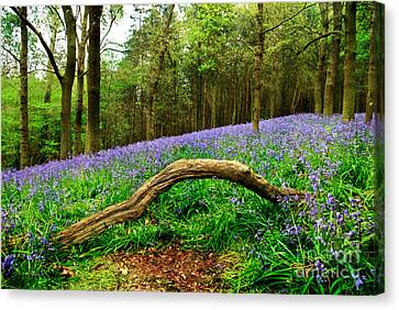 Natural Arch And Bluebells Canvas Print by John Edwards