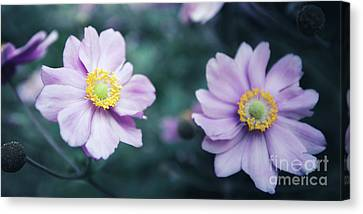 Canvas Print featuring the photograph Natural Beauty by Hannes Cmarits