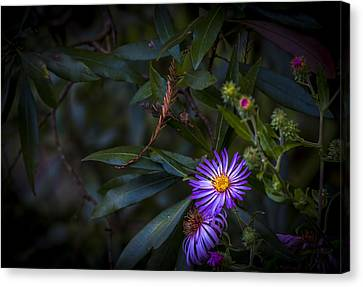 Natural Beauty Canvas Print by Marvin Spates