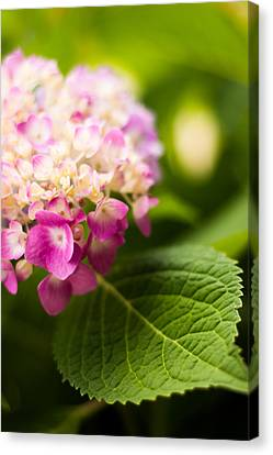 Natural Beauty Canvas Print
