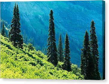 West Glacier Canvas Print - Natural Colonnades by Todd Klassy
